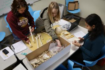 人类学 Students Measuring Bones