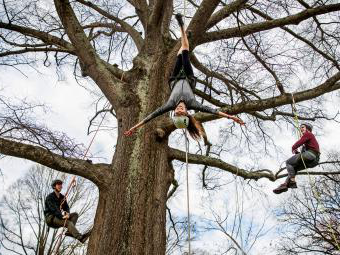BETWAY必威体育在户外 tree climbing demonstration with three students hanging on a tree, one upside-down