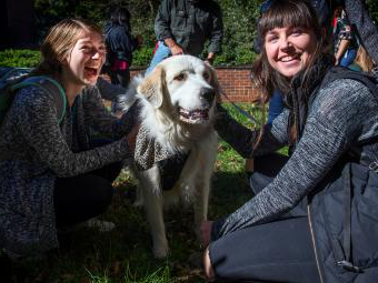 Students pet big fluffy dogs outside